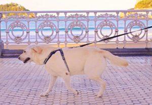 hoteles que admiten mascotas en san sebastián donostia. nuestro hotel es dog friendly y los perros son bienvenidos